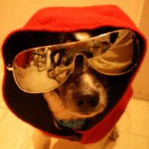 Perro gracioso con gafas