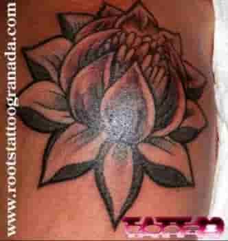 Flor de loto en sombras